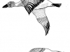 渡り鳥 モノクロ