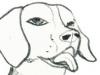 dog-10046