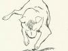 dogsp